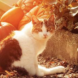 Wim Lanclus - Autumn Cat