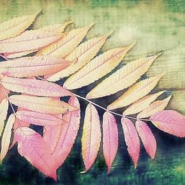 Slawek Aniol - Autumn Charm 3