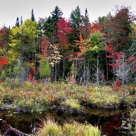 David Patterson - Autumn Color in the Adirondacks