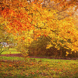 Autumn Color by Lindley Johnson