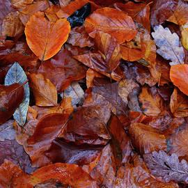 Autumn Colors Donegal by Eddie Barron