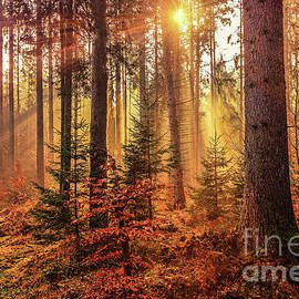 Claudia M Photography - Autumn colors in the forest