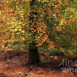 Ann Garrett - Autumn Colours on Cannock Chase
