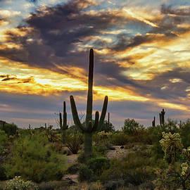 Saija Lehtonen - Autumn Desert Skies Aglow