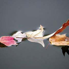Brian Wallace - Autumn Drifting