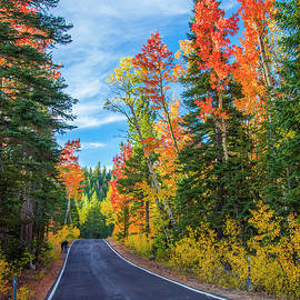 Lynn Bauer - Autumn Drive Over Ebbotts Pass