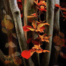 Jessica Jenney - Autumn Epilogue