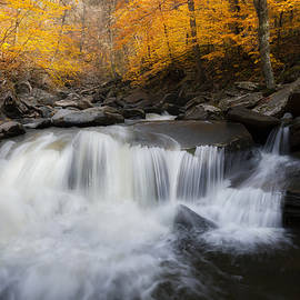 Autumn Falling by Bill Wakeley