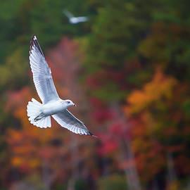 Amy Jackson - Autumn Flight