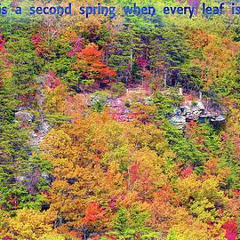 Autumn Flowering by John M Bailey