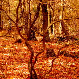 Autumn Forest by Arlane Crump