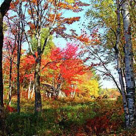 Debbie Oppermann - Autumn Forest