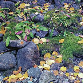 Brian Kerls - Autumn Forest Floor