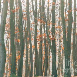 Autumn forest - Jelena Jovanovic