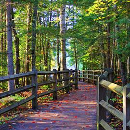Michael Rucker - Autumn Forest Trail