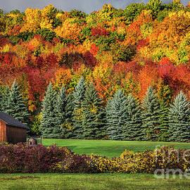 Joann Long - Autumn Glorious Color