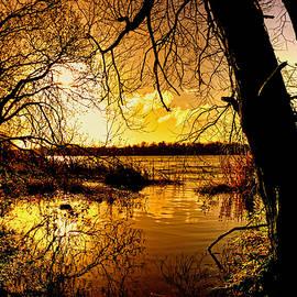 Autumn Gold by Kim Shatwell-Irishphotographer