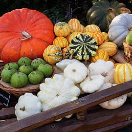 Shirley Mitchell - Autumn Harvest 1