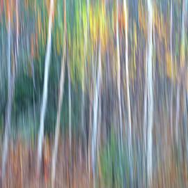 Autumn Impression by Bill Morgenstern