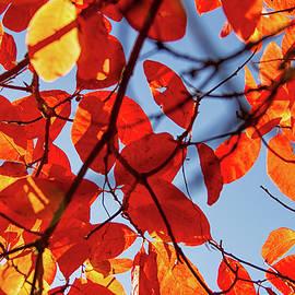 Kunal Mehra - Autumn in the arboretum
