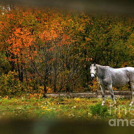 Autumn In The Pasture by Angela Rath