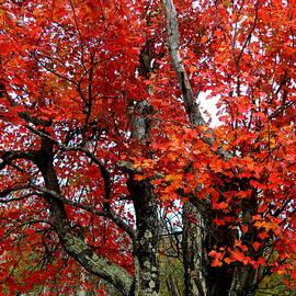 Autumn in Virginia - I I I by Arlane Crump