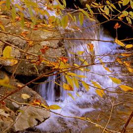 Autumn in Virginia - I V by Arlane Crump