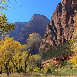Autumn in Zion by Charlene Cox