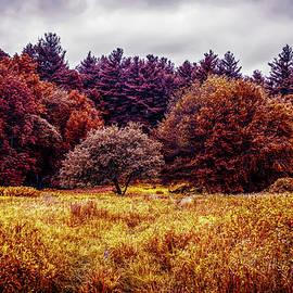 Lilia D - Autumn Landscape UR