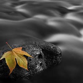 Autumn Leaf in West Clear Creek, Arizona by Dave Wilson