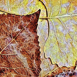 Autumn Leaves Brown And Gold by Sharon McConnell