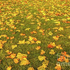 Marv Vandehey - Autumn Leaves on Lawn