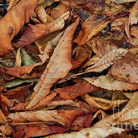 Rka Koka - Autumn leaves