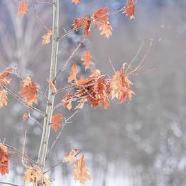 Autumn leaves by Sergei Dolgov