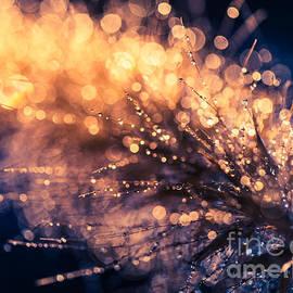 Wei-San Ooi - Autumn Light