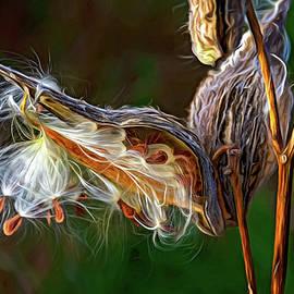 Autumn Milkweed 16 - Paint by Steve Harrington