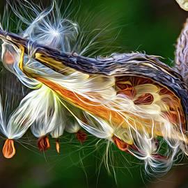 Autumn Milkweed 2 - Paint by Steve Harrington