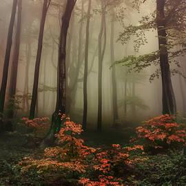 Autumn mornin in forgotten forest by Jaroslaw Blaminsky