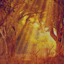 Manjot Singh Sachdeva - Autumn Morning