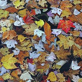 Autumn Mosaic by Juergen Roth