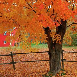 Gary Corbett - Autumn near New Germany, Nova Scotia