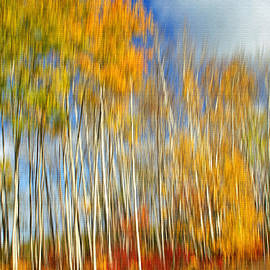 Autumn Paint by Bill Morgenstern