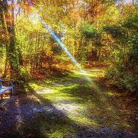Autumn park light by Lilia D