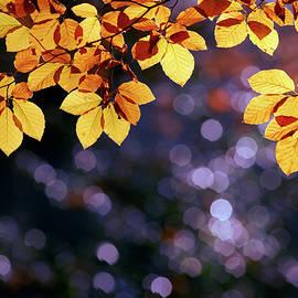 Roeselien Raimond - Autumn Party