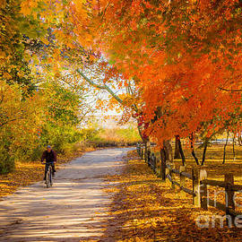 Autumn Path by Alissa Beth Photography