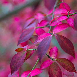 Autumn Pink And Purple by Karol Livote