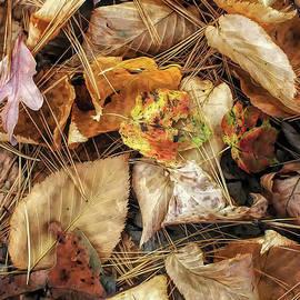 Mike Nellums - Autumn Potpourri