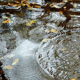 Autumn Rain Puddles by Arlane Crump