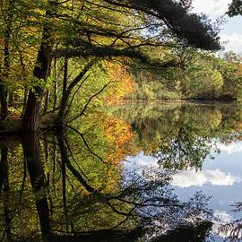 Shirley Mitchell - Autumn reflections