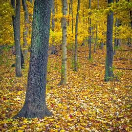 Autumn by Samuel M Purvis III